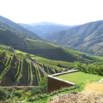 Vista sobre as vinhas e o rio