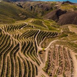 O Colheita Tardia de Colinas do Douro é o pairing perfeito para o magusto do S. Martinho