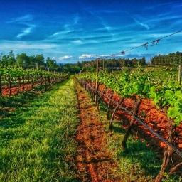 Quinta da Biaia apresenta rebranding e novos vinhos